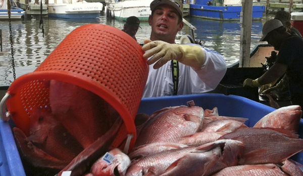 Federal Ruling on Allocation Favors Gulf Commercial Red Snapper Fishermen