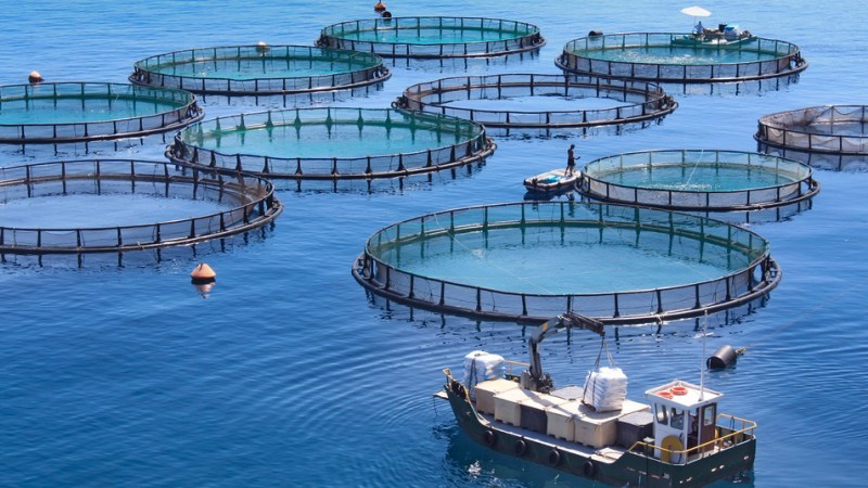 International Team of Scientists Exploring Use of Algae for Aquaculture Feedstock