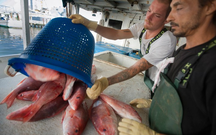 Red Snapper Allocation Top Topic at Recent Gulf Council Meeting