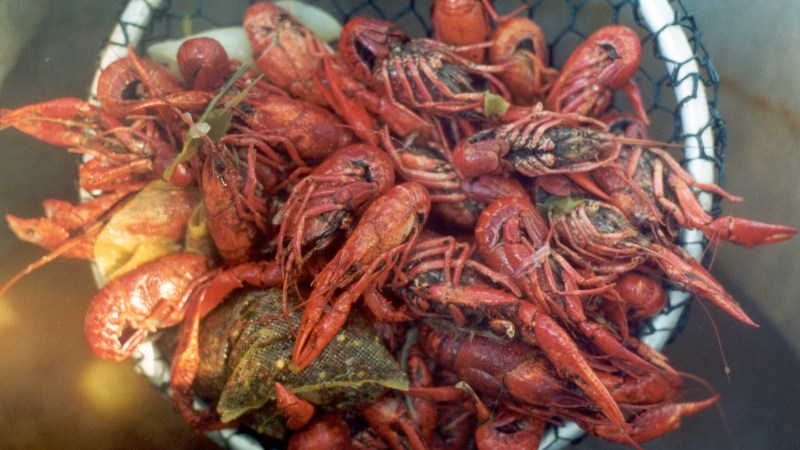 Red Swamp Crawfish Withdrawn from Injurious Wildlife Petition to U.S. FWS