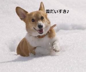 コギと雪 北海道壁紙の旅より