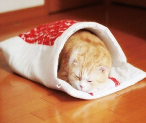 ぬくぬく猫