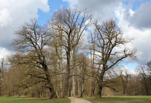 Im deutschen Teil des Parks ging es zunächst Richtung Norden. Foto: Franziska Gurk
