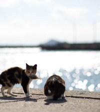 gwendalperrin.net tashirojima lobby félin chat japon