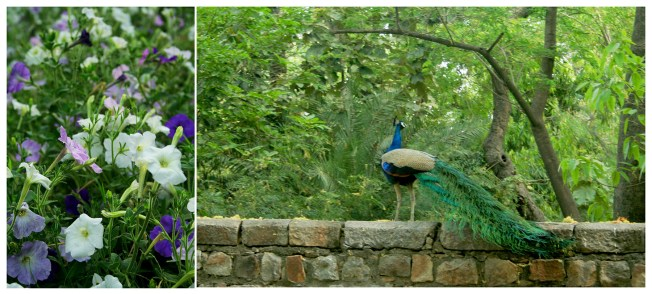 Flora and Fauna at Humayun's Tomb
