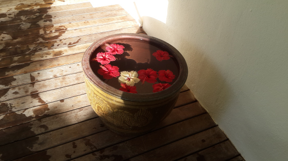 Loveliness of nature: Hibiscus in an earthen pot