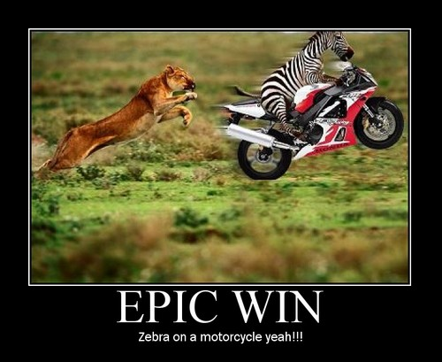epic win : zebra on a motorcycle !