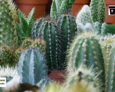aprende como regar tu cactus