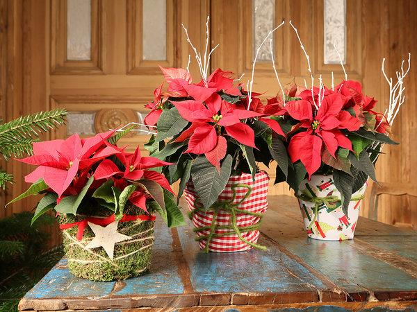 Macetas adornadas con telas y hilo brillates , gritan feliz navidad por todos lados.