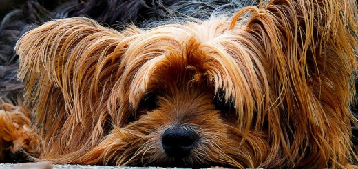 dog-200942_960_720