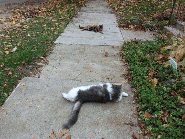 sidewalk-showdown