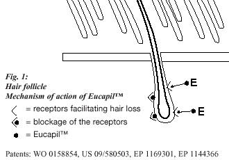Eucapil Fluridil Anti Androgen and Hair Loss