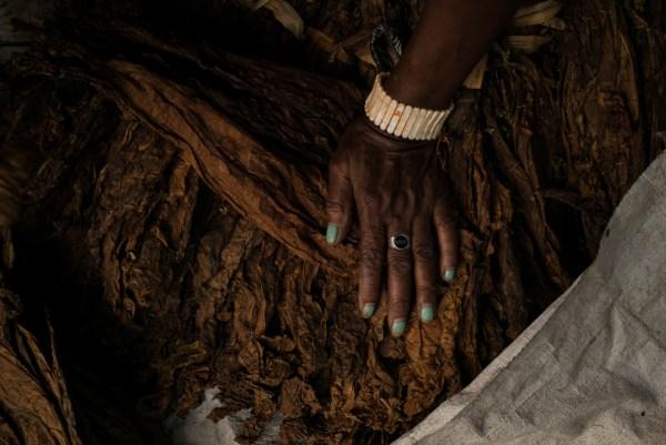 Tobacco seller's hand, Mirebalais market, Mirebalais, Haiti. May 2014
