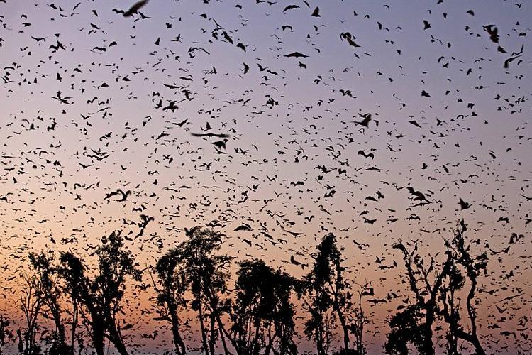 Africa - David Attenborough's Natural History Series Blu-ray