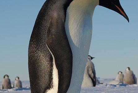 Penguins Just Gotta Be Me