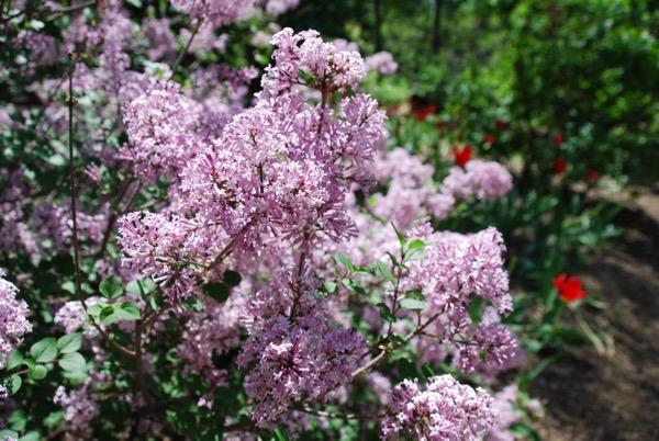 Teal & Lilacs - 8
