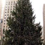 Rockefeller Center 2012