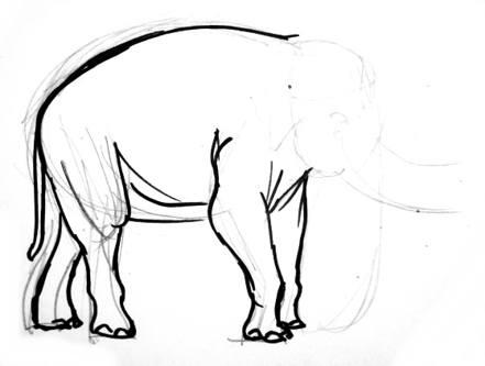 Азиатский слон поэтапно