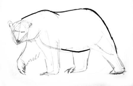 Рисуем полярного медведя