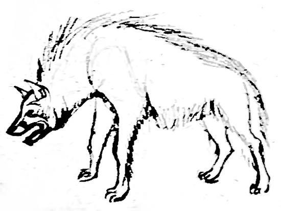Гиена рисунок