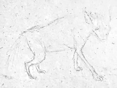 Гиена -рисунок карандашом