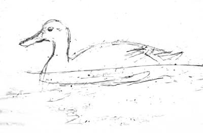 Рисуем плывущую утку
