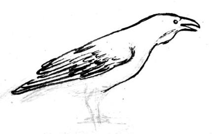 Рисуем ворона 13