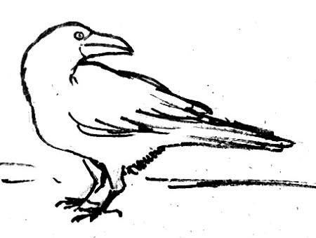 Ворон рисунок