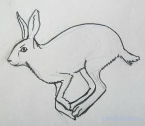 Заяц рисунок