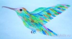 Радужная колибри