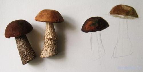 Рисуем грибы поэтапно