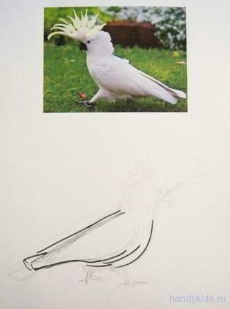 Нарисуем попугая какаду