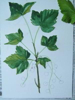 Рисуем листья смородины