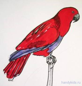 Рисунок попугай