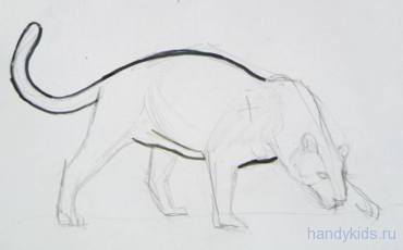 поэтапное рисование ягуара