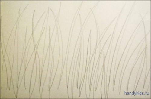 Обводилка трава