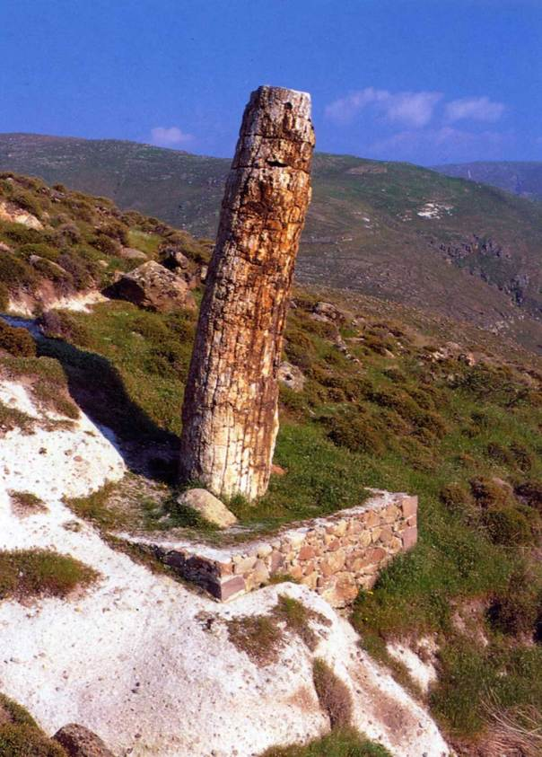 lesvos-petrified-forest-1