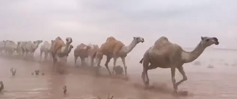 Πλημμύρισε η έρημος της Σαουδικής Αραβίας – Εκπληκτοι οι βεδουίνοι (βίντεο)