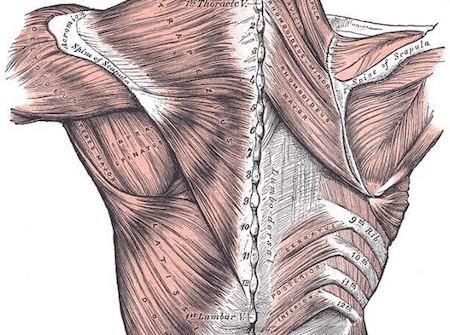homepage musculo-espalda