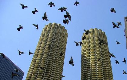 wilco_birds