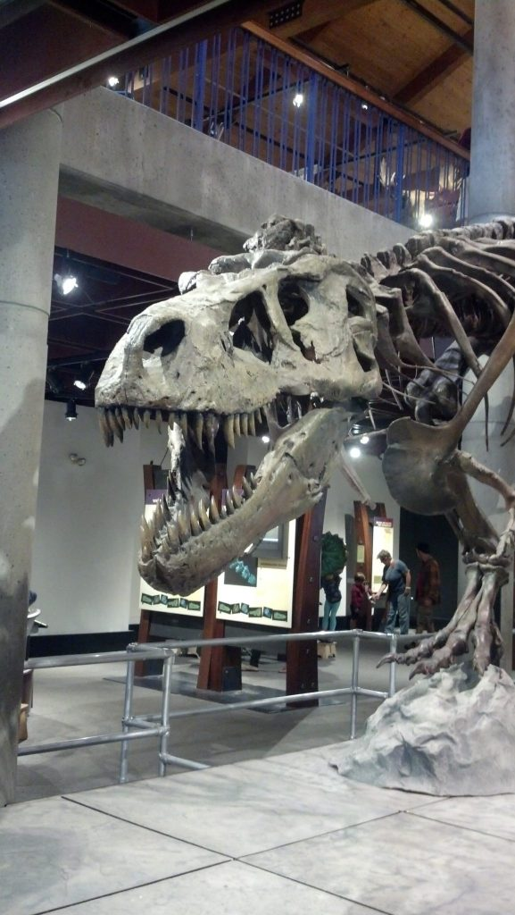 A T-Rex Named Sue Montshire Museum of Science