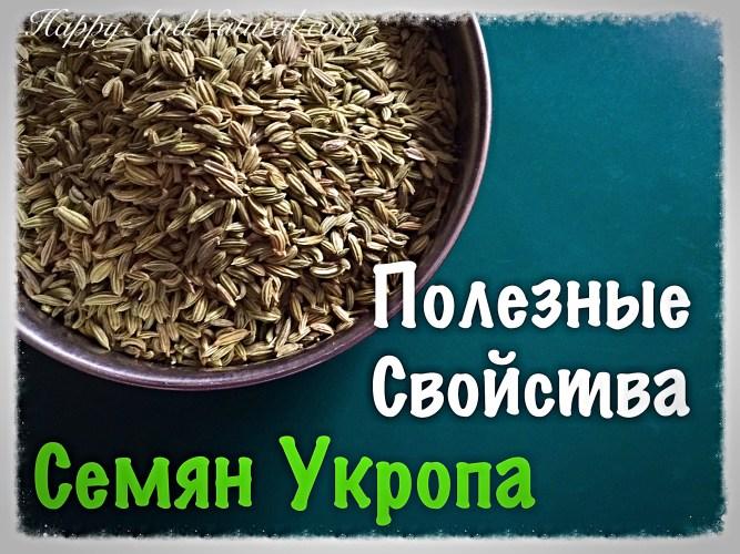 Семена Укропа: полезные свойства и применение