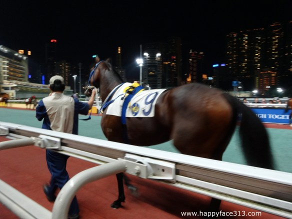 horse in motion at the Happy Valley Racecourse in Hong Kong