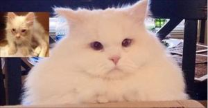 Cat Found on Roadside Surprises Humans with His True Fluff