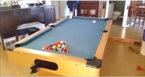 Cats Can't Hold Back Their Excitement When They Discover A Pool Table