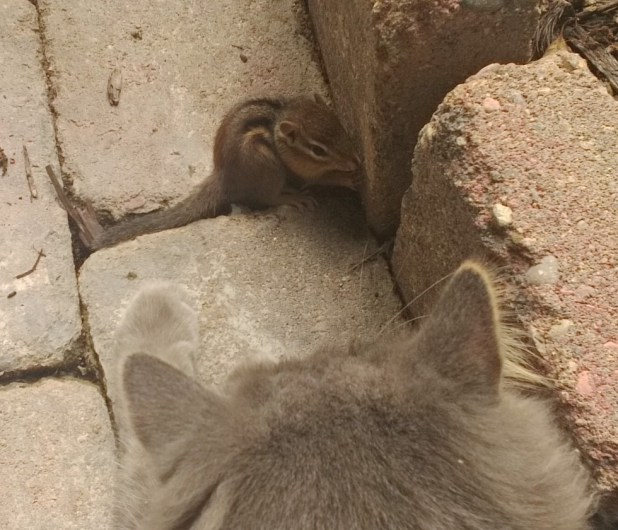 Cat Makes Friends with a Chipmunk in These Cute Photos
