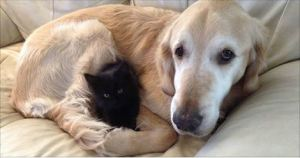 Dog Missed Having a Cat, So They Found Him a New Kitty Friend