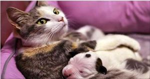 This Newborn Puppy Was Dying. But Then This Cat Did Something Unbelievable.