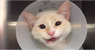 This Rescue Cat May Have A Crooked Jaw… But That Doesn't Stop Her From Smiling!