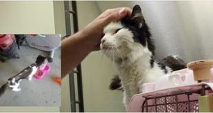 5 Pound Stray Cat Can't Stop Smiling When He Finds a Place to Call Home